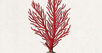 colombre-corallo-recensione